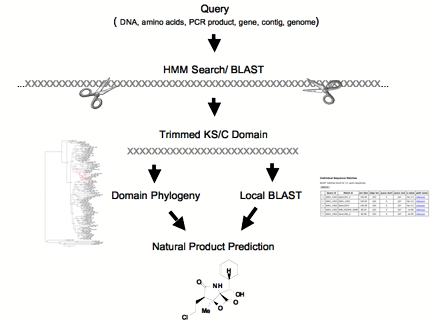 workflow_diagram